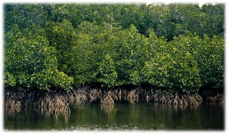 (https://www.iucn.org/news/forests/201706/mapping-global-mangrove-restoration-potential)